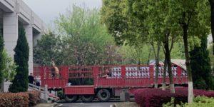 Pile di urne a Wuhan pongono nuove domande sul bilancio delle vittime