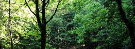 Wwf Toscana: «Per le aree protette occorre una maggiore ed effettiva tutela»