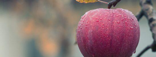Giornata mondiale dell'Alimentazione: spunti di Decrescita Felice
