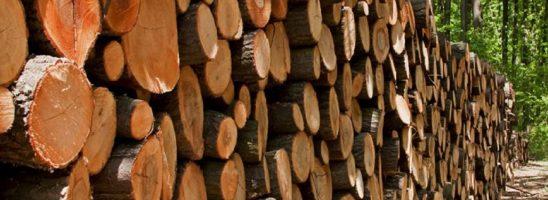 L'appello di 500 scienziati ai leader politici: «Bruciare biomassa distrugge il verde e la biodiversità»
