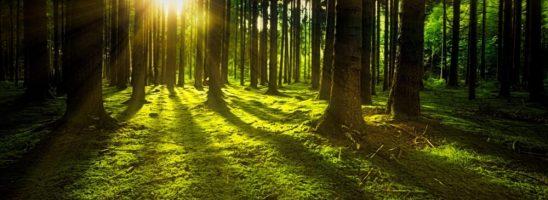 Ministero per la Transizione ecologica: il punto di vista del Movimento per la Decrescita Felice